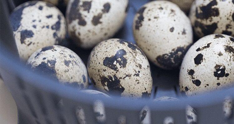cocer huevos en thermomix